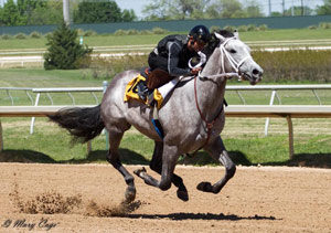 Bling on the Music is a Texas-bred daughter of Lane's End Texas stallion Too Much Bling (Photo by Mary Cage)